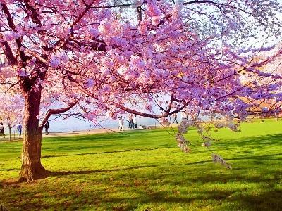 Buona Pasqua e arrivederci al 26 Aprile!